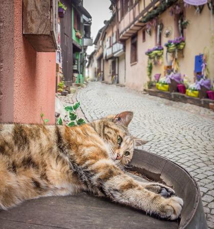 リクヴィール、フランスで趣のある通り広大な怠惰な猫。