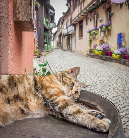 A lazy cat sprawling out on a quaint street in Riquewihr, France.