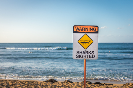 A warning sign indicating sharks have been sighted in the water at Ali'i Beach in Haleiwa, on the North Shore of Oahu, Hawaii.