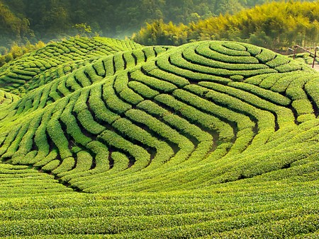 tea plantation: Eight Trigrams (a set of symbolic signs created in ancient China)