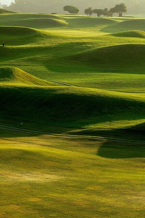 golf place with nice green  photo