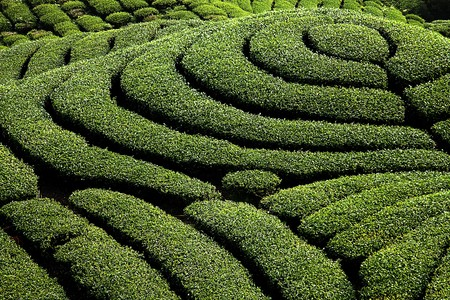 known:  Ba Gua Tea garden in mid of Taiwan, This is the very famous area known for hand-picking of tea