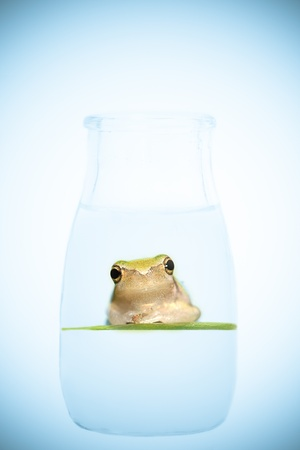 frog in the bottle  photo