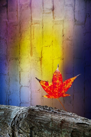 Autumn leaves over wooden background with copy space Stock Photo - 11722993