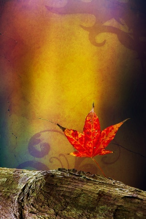 Autumn leaves over wooden background with copy space  Stock Photo - 11722980