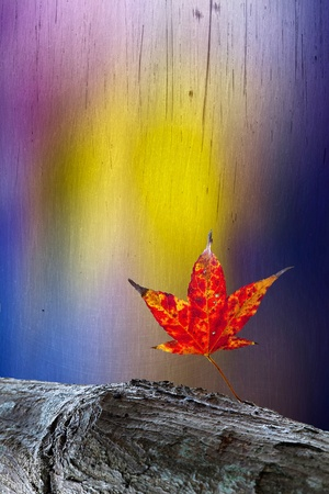Autumn leaves over wooden background with copy space Stock Photo - 11722996