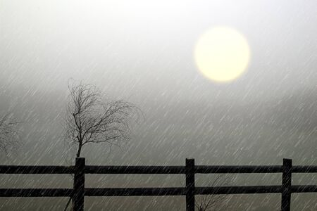 Withered, and the un-clear sun in the fog (like a painting)  photo