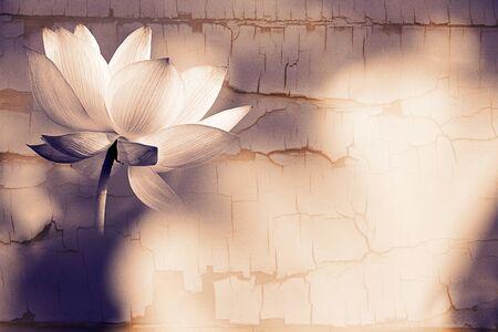 white lotus: Beautiful Lotus for background use  Stock Photo
