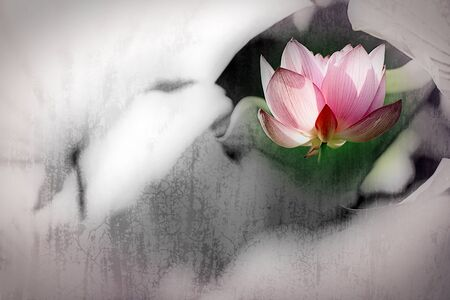 lotus flowers: Beautiful Lotus for background use  Stock Photo