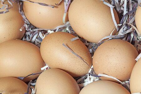 Organic eggs photo