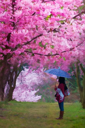 blooming: Painting style of landscape with nice sakura flower