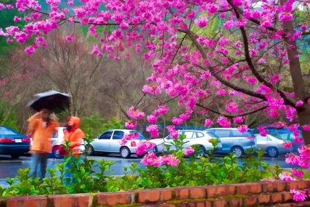 Painting style of landscape with nice sakura flower photo