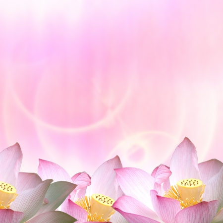 Beautiful Lotus for adv or others purpose use  photo
