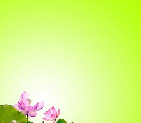 Lotus with nice background for adv or others purpose use