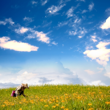daylily field in the mountain with beautiful cloudscape background