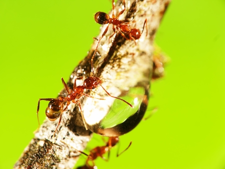 Nature Ant with nice background for adv or others purpose use photo