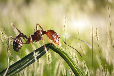 ant with isolated background for adv or others purpose use photo