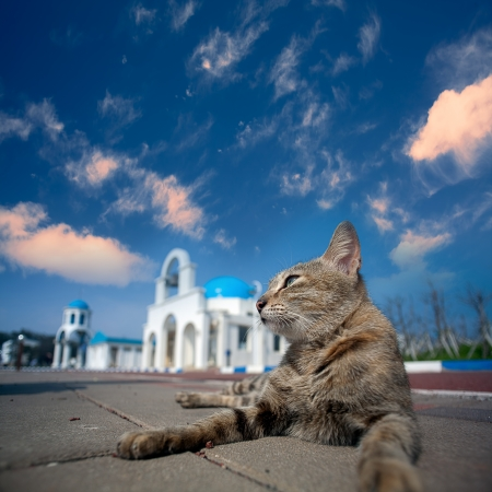 Greek Architecture with bule sky with a cat behind it  photo