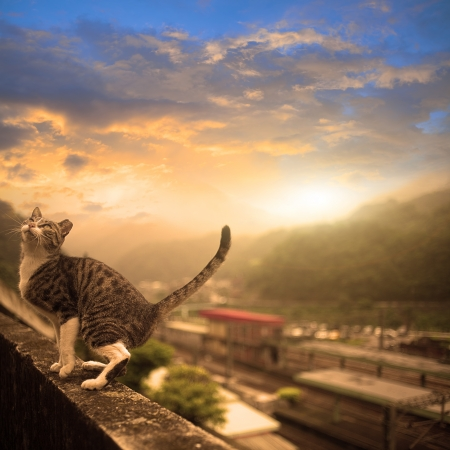 Cat with nice sky photo
