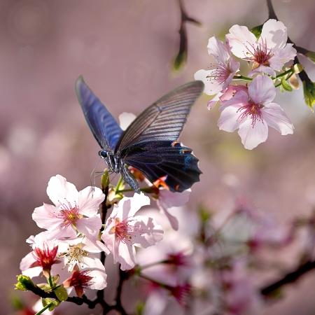 ADV 또는 다른 목적으로 사용하기에 고립 된 나비와 튤립