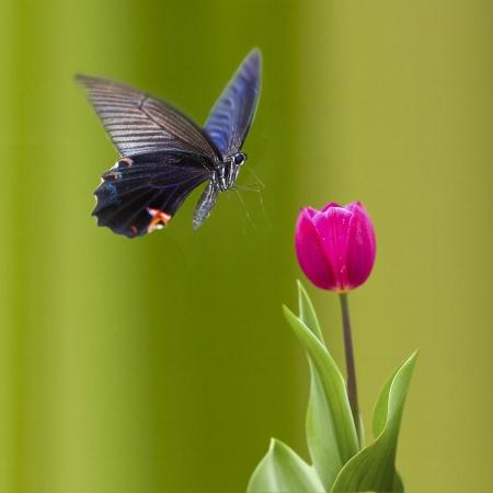 Papillon sur fleur gentil pour adv ou l'utilisation d'autres fins Banque d'images - 15473994