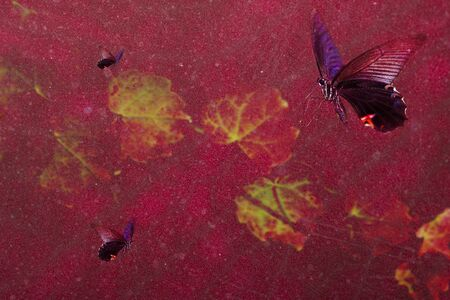 Beautiful butterfly background  for adv or others purpose use Stock Photo - 15645597