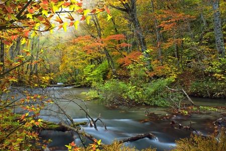 rushing water: Oirase River at Aomori Japan