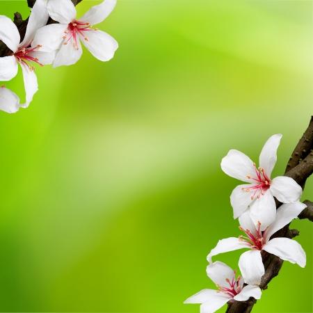 arbol de pascua: hermosas flores de tung para ADV o el uso de otros efectos