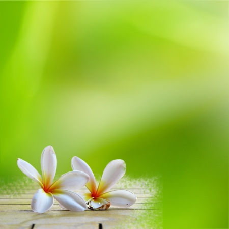 zen spa: frangipani on light green background for adv or others purpose use Stock Photo