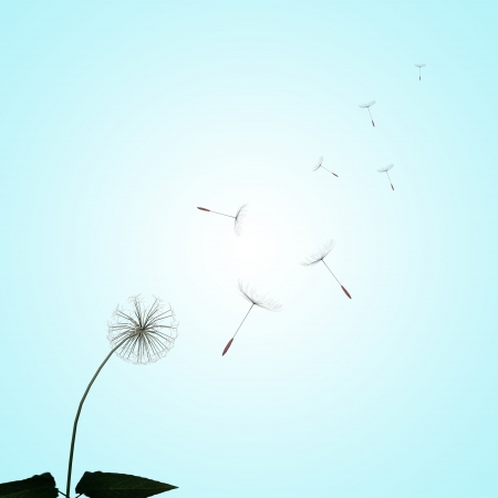dandelions with nice light green background photo