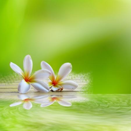 frangipani op lichtgroene backgroun Stockfoto