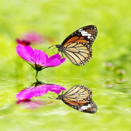 butterfly sitting on green grass field with flowers with nice reflection