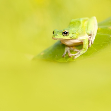 Frog with nice green background for adv or others purpose use Stock Photo - 16766308