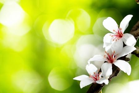 mooie tung bloemen voor adv of anderen daartoe gebruik