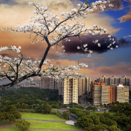 nice view mixed with nice sakura for adv or others purpose Stock Photo - 17501480