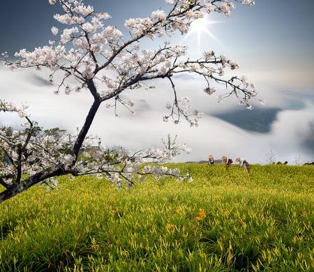 Day lily flower mixed with nice sakura tree Stock Photo - 17501471
