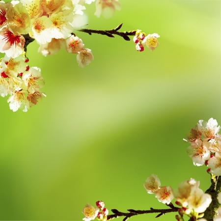Sakura with nice background Stock Photo - 17501473