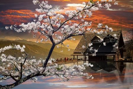 Beautiful sakura in the temple Stock Photo - 17501464