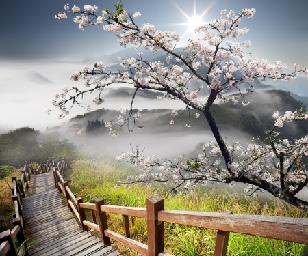Sakura with nice background Stock Photo - 17501468