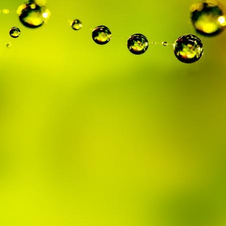 The spider web  cobweb  closeup background Stock Photo - 17501451