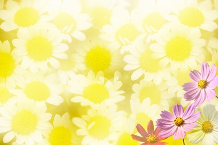 Beautiful Floral Border for adv or others purpose use Stock Photo - 17592116