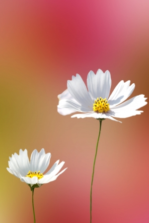 Beautiful Floral Border for adv or others purpose use Stock Photo - 17592106