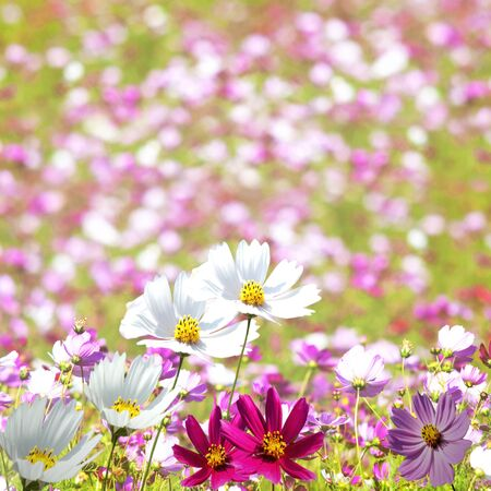 Beautiful Floral Border for adv or others purpose use Stock Photo - 17592111