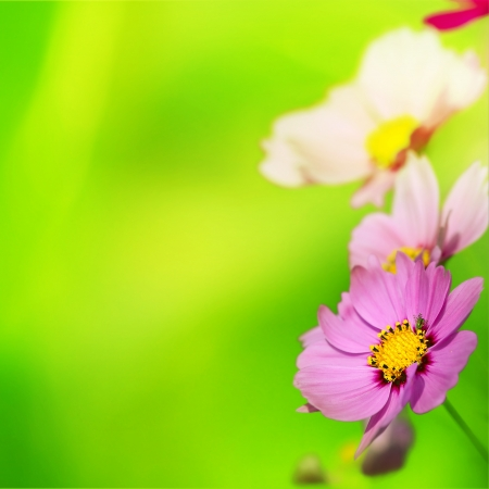 Beautiful Floral Border for adv or others purpose use Stock Photo - 17592108