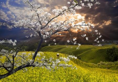 尼斯景觀與櫻花的副詞或其他用途使用