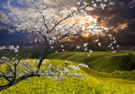 early summer: Nice landscape with sakura for adv or others purpose use
