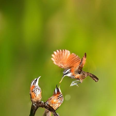 Mujer alimentar a un bebé hambriento ave