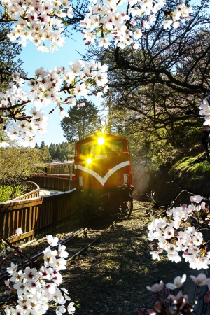 Alishan train and cherry for adv or others purpose use
