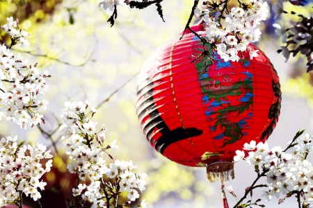 Beautiful Sakura place in Taiwan for adv or others purpose use photo