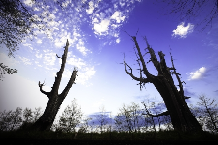 couple tree under the blue sky for adv or others purpose use Stock Photo